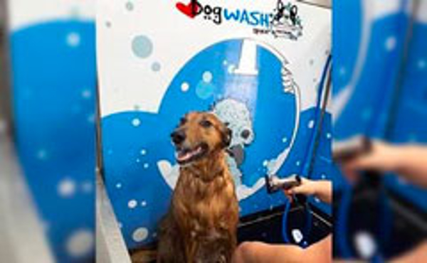 Franquicia I Love Dog Wash