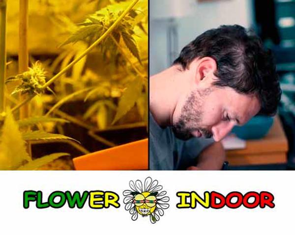 Franquicia Flower Indoor